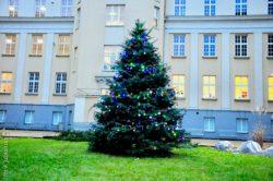Długosz świątecznie oświetlony i ozdobiony